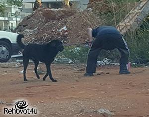 ממשיכים במבצע האכיפה כנגד בעלי כלבים שאינם אוספים את הגללים