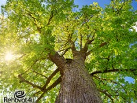 ברחובות 18,000 עצים בשטח הציבורי
