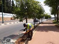 קיץ 2018: 200,000 פרחי העונה יישתלו ברחבי העיר