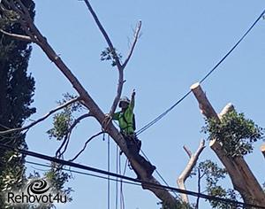 פתיחת שנת הלימודים: גם העצים מתכוננים לבוא הילדים