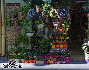חנויות פרחים מומלצות ברחובות