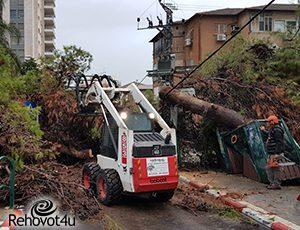 """מחשש לנפילת עצים וגרימת נזקכ-30 עצים """"חולים"""" ייכרתו ברח' יעבץ"""