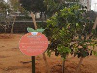 לראשונה ברחובות:חורשת פירות אכילים- לרווחת התושבים