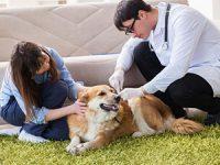 קרציות ופרעושים אצל כלבים