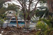 מבצע שקורה פעם בתשעים שנה: העתקת עץ הפיקוס הגדול ביותר בעיר