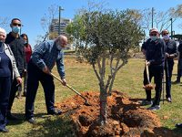 יום הזיכרון לשואה ולגבורה: מנציחים את זכרון הנספים בשואה בנטיעת עצים