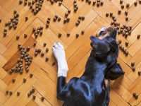 איך בוחרים מזון מומלץ לכלבים?